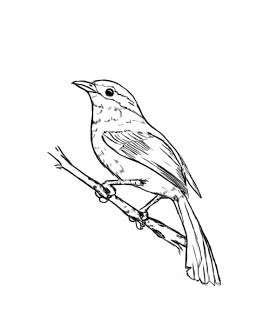 kako narediti ptice s svinčnikom korak za korakom