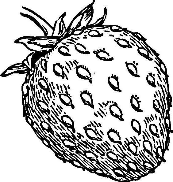 Как да нарисувате ягоди с молив