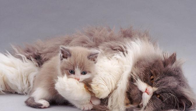 come nutrire un gatto che allatta