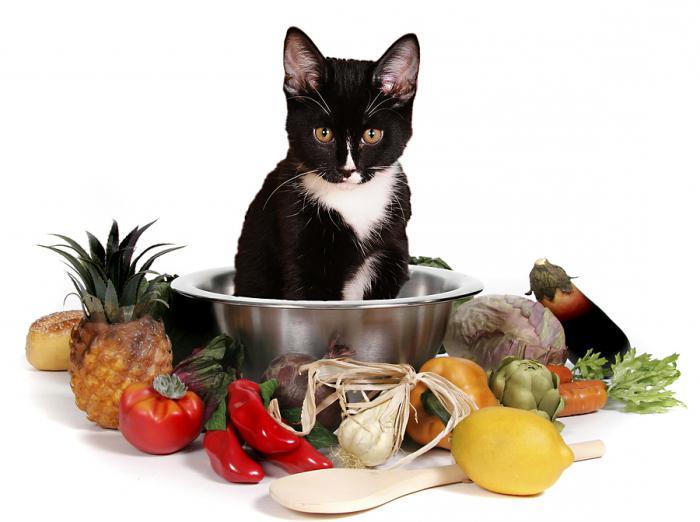 nutrire il gatto