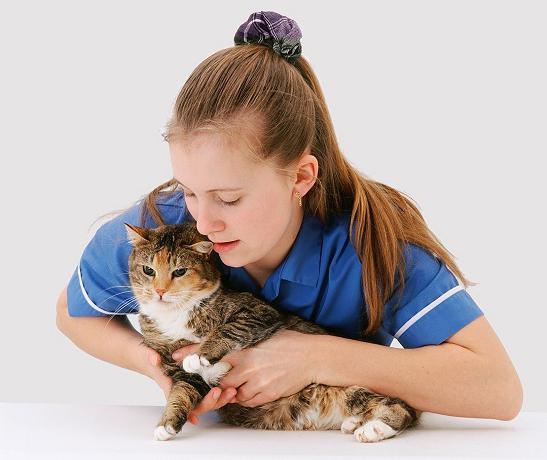 cura dei gatti