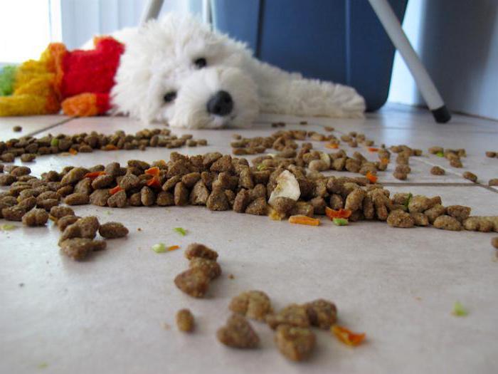 какво може да нахрани куче