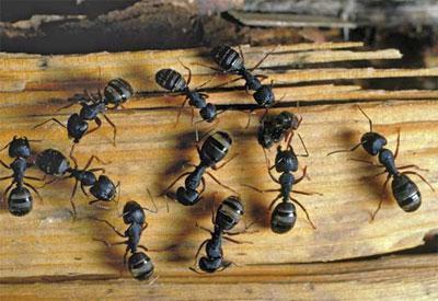 come distruggere le formiche nella vasca da bagno