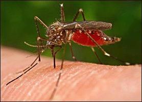 како се ријешити комараца
