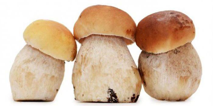 come far crescere i funghi bianchi a casa