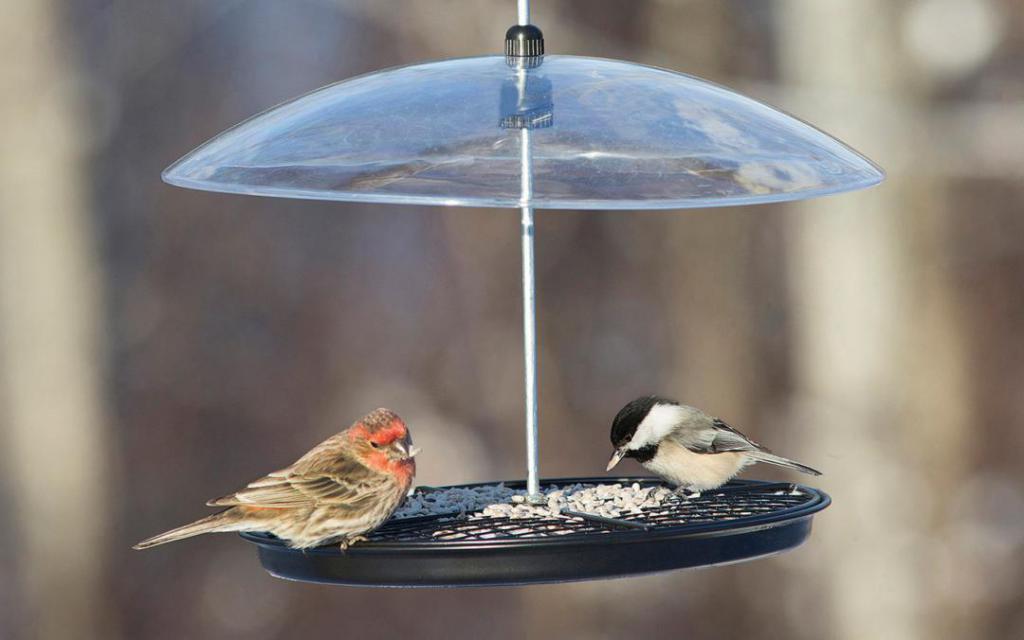 Слатка храна за птице