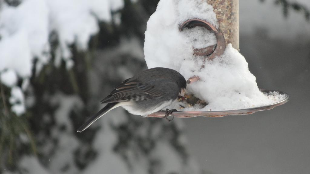 Помозите птицама зими