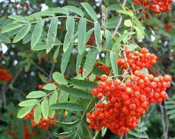 askofen povećava ili snižava krvni tlak