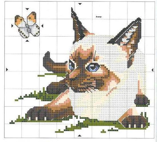 Taupe Zidne Boje Za Svoju Sobu: Kako Napraviti Mačku Za Križ?
