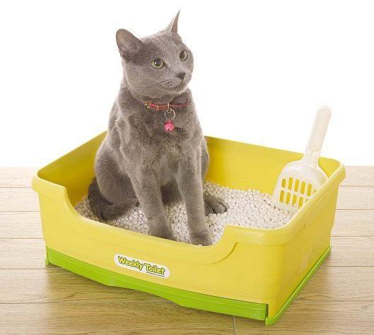 jak zvednout kotě