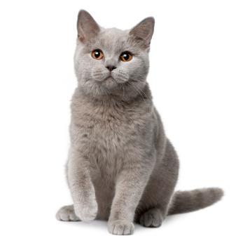 jak vzkřísit koťátko