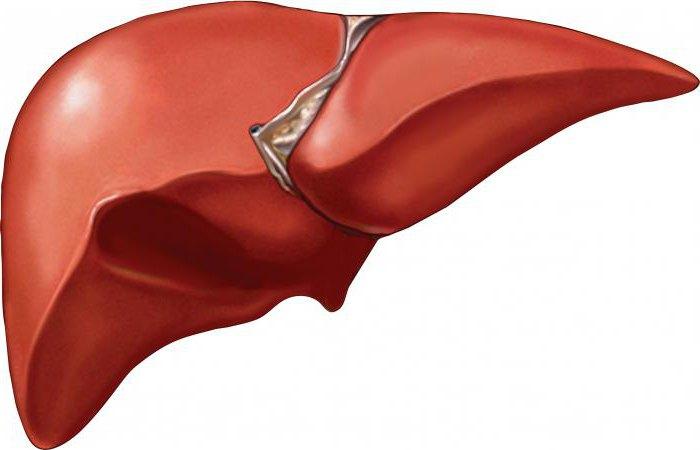 come ripristinare rapidamente il fegato