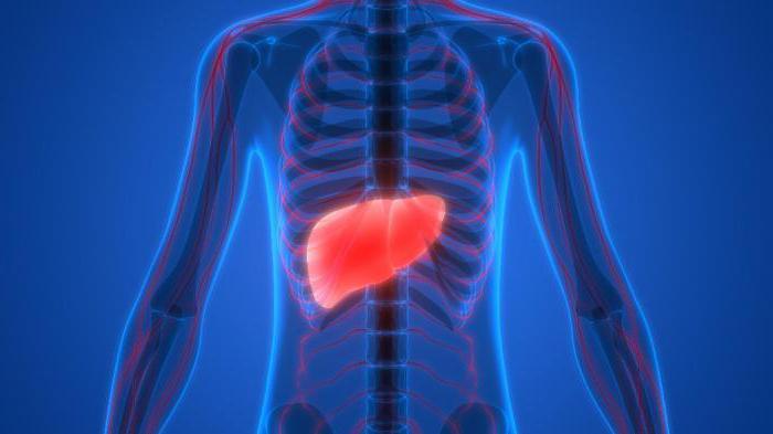 come ripristinare il fegato a casa