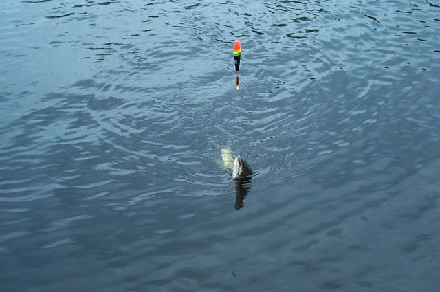 kako ladjo pluti na ribiško palico