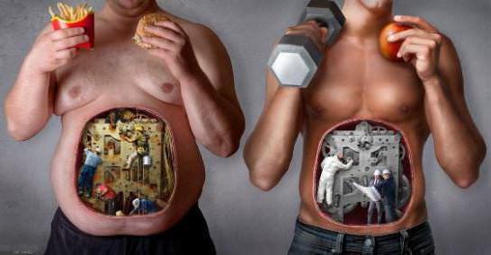 metabolizm, co to jest w prostym języku
