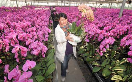 poslovanje s cvijećem
