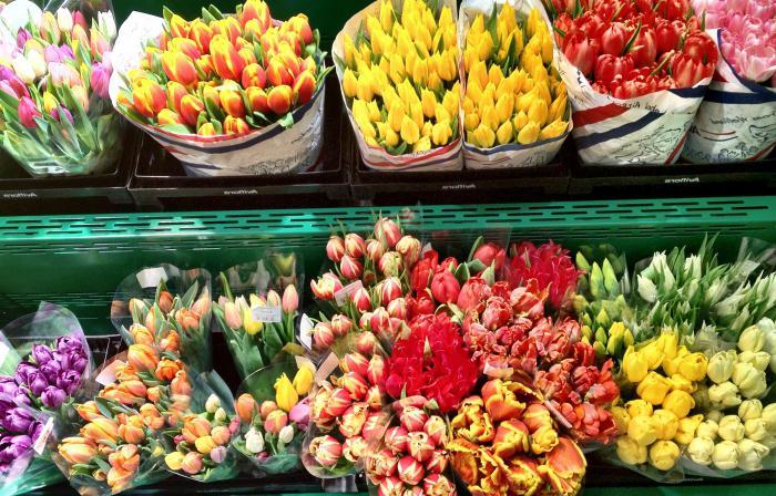 poslovanje s cvijećem gdje početi
