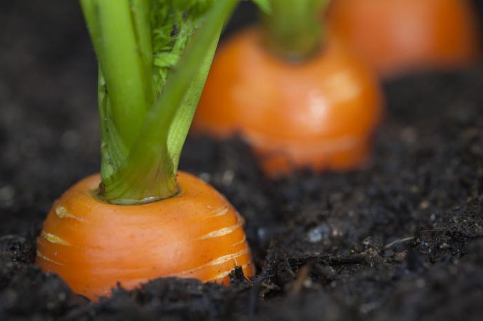 kako pohraniti mrkvu
