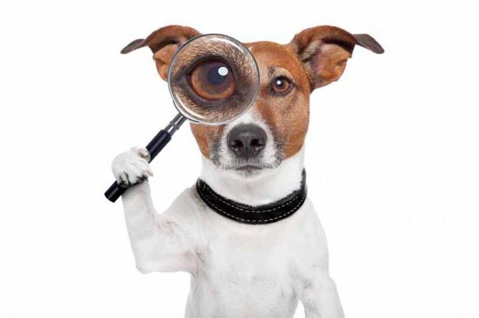 Come insegnare a una squadra di cani