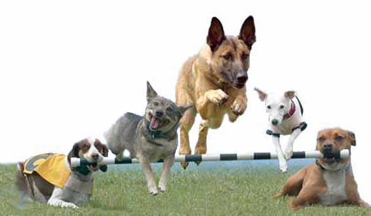 Како тренирати псе