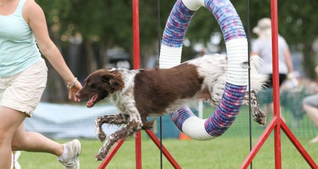 како тренирати пса код куће