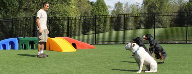 Како тренирати одраслог пса