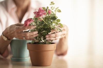 come trapiantare un fiore