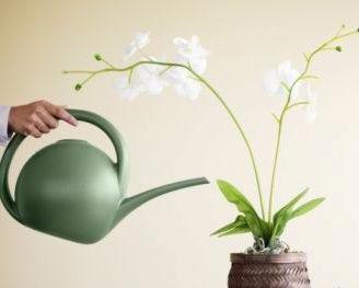 снимка на орхидея