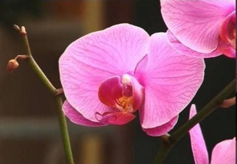 разходи за орхидеи