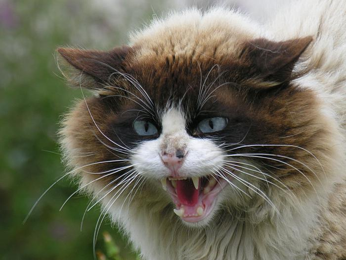 jak odzwyczaić kociaka gryzącego i drapiącego