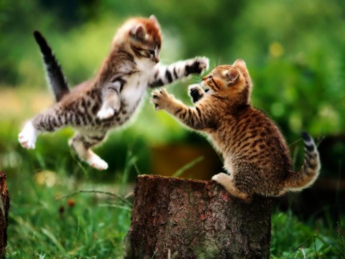 jak odzwyczaić kociaka gryząc i drapiąc podczas gry
