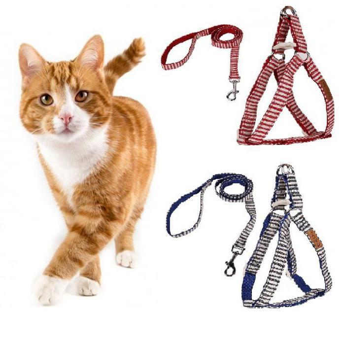 Jak postavit postroj na kočku