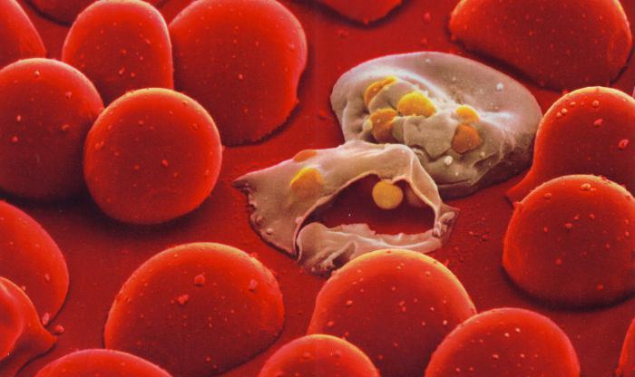 rdečih krvnih celic