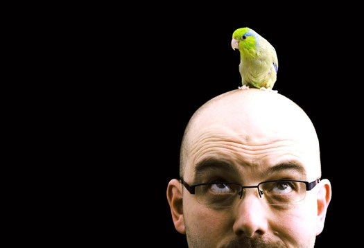 cervello di uccello