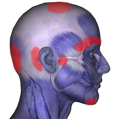 tabella dei muscoli della testa