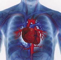 proprietà del muscolo cardiaco