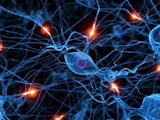 nervových buněk