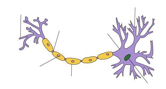 funkce nervových buněk