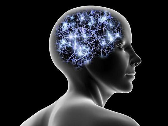mozkové nervové buňky