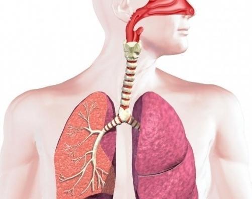 Дишни органи животиња