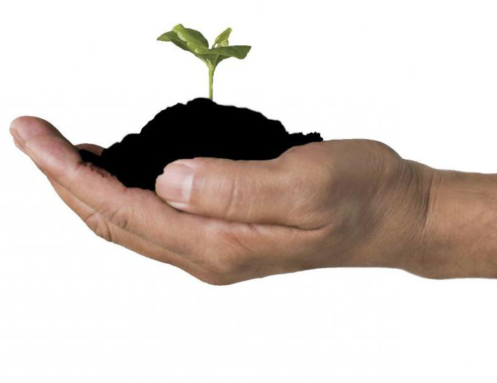 Какво е хумус? Какви свойства на почвата зависят от неговото количество?