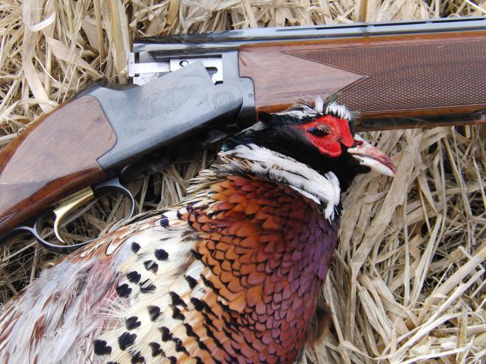 Foto di caccia al fagiano
