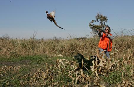 Fagiano caccia con husky