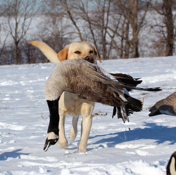 Лов на водолюбиви птици