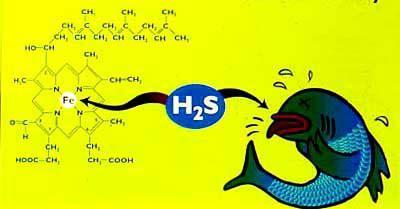 effetti dell'avvelenamento da idrogeno solforato