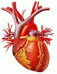 ipertensione 2 gradi