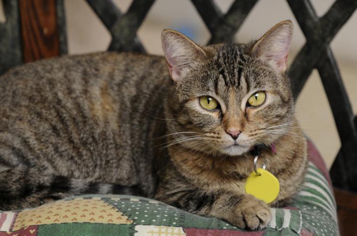 Ipopotassiemia nei sintomi del gatto