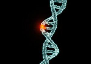 analiza hipotez človeškega izvora