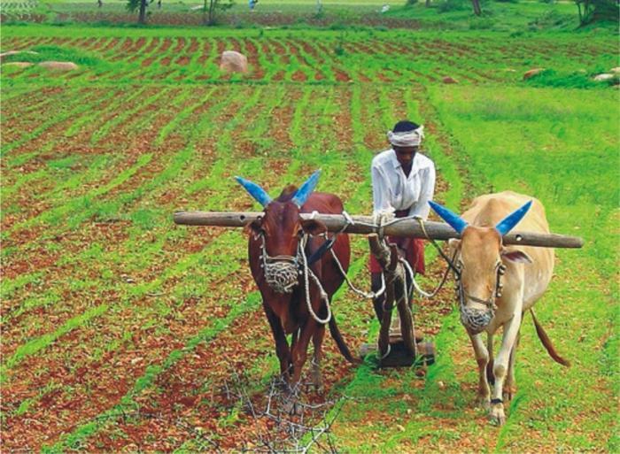 Индийско земеделие