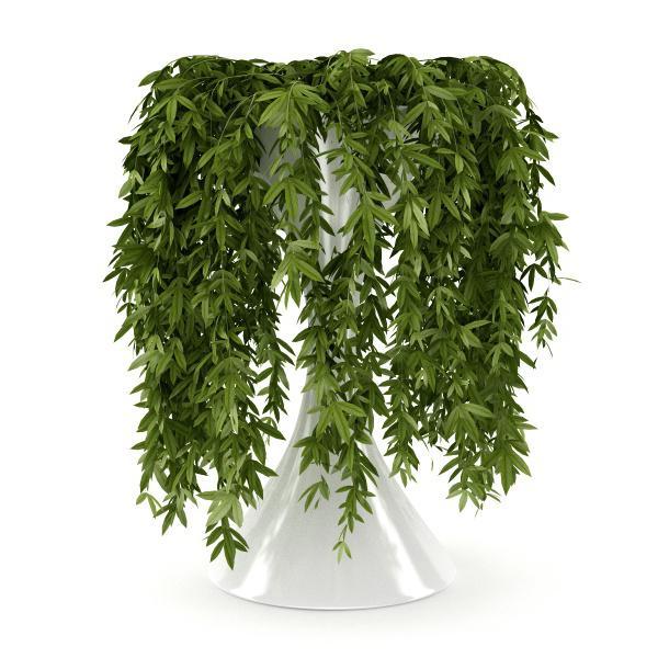 вътрешни катерачни растения